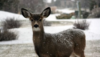 OMG—A Deer! Why You Need Both Seed and Panel Data for Deliverability